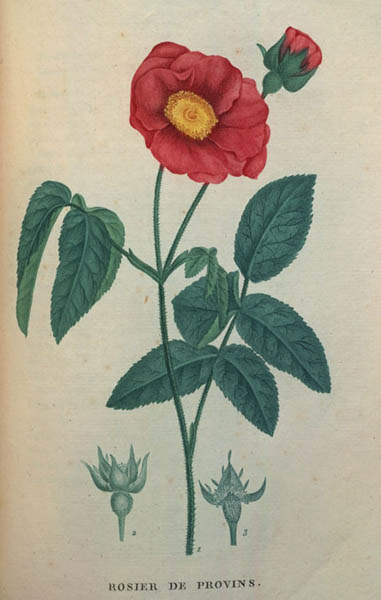 roses-18e-l
